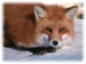 http://foxypaws.narod.ru/photos/071.jpg