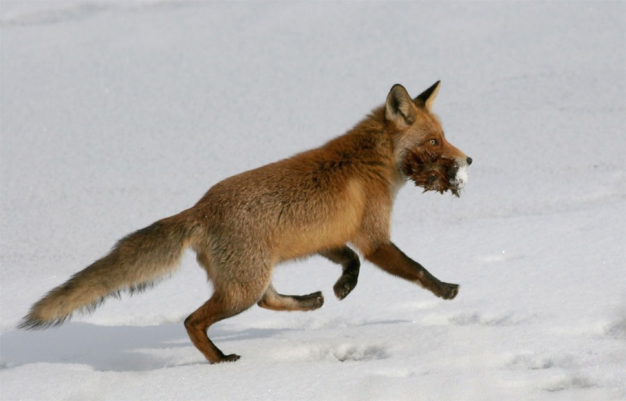 http://foxypaws.narod.ru/photos/update/foxes073.jpg